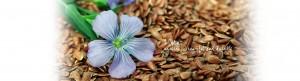 Slide Telene Nencioni | Natural Beautiful and Durable